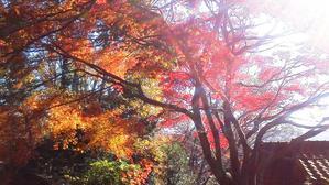12/15里山の紅葉 -