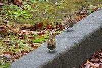 雨上がりの朝に、紅葉や鳥など - ぶらり散歩 ~四季折々フォト日記~