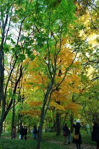 皇居の散策雑木林 - 満足満腹  お茶とごはん