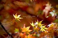 * 秋と冬 - Kaara's Eye