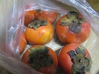 柿 - さかえのファミリー