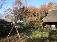 『木曽川水園の鳥と風景~』 - 自然風の自然風だより