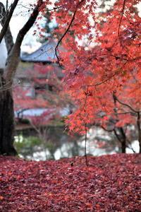 紅葉の反省会 - Taro's Photo