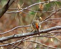 嶺公園で~ 小鳥たち ~ - 星の小父さまフォトつづり
