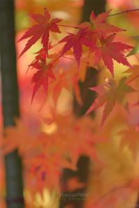 豊郷地区の秋散歩Vol.3 - TOCHIGI FOUR SEASONS
