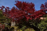 箱根美術館、後編 - バリ島大好き