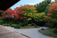 泉涌寺御座所庭園の紅葉 - ぴんぼけふぉとぶろぐ2