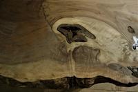 クラロウォルナットの入皮 - SOLiD「無垢材セレクトカタログ」/ 材木店・製材所 新発田屋(シバタヤ)