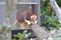 タニの出勤 - 動物園へ行こう