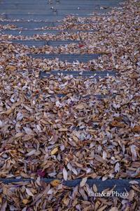 落ち葉 - 季節のおくりもの