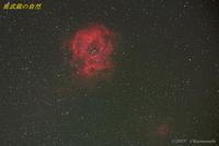 赤いバラ - 奥武蔵の自然
