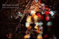 Tears in Rain - すずちゃんのカメラ!かめら!camera!
