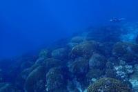 19.12.22太平洋をドボン。 - 沖縄本島 島んちゅガイドの『ダイビング日誌』