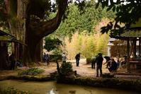 さる祭り(天理市福住別所) - 奈良・桜井の歴史と社会