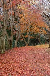 房総のむらで最後の?紅葉を、他 - ぶらり散歩 ~四季折々フォト日記~