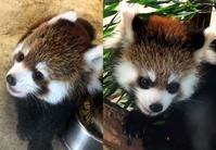 埼玉県こども動物自然公園と東武動物公園の旅行記を姉妹ブログ「レッサーパンダ紀行」にアップしました - (続)レッサーパンダ紀行