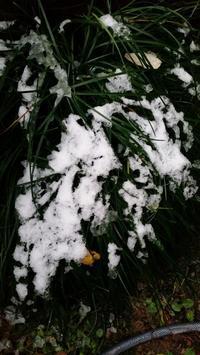 初雪 - daisy book