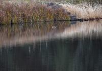 新・カモの泳ぐ池 - できる限り心をこめて・・Ⅳ