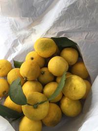 柚子収穫 - 地上50mでも野菜はできました、そして3mへ