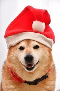 MerryChristmas! - 写心食堂