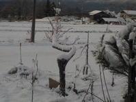 山の初雪(No.141) - 薪窯冬青 犬と山暮らし