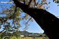 人生いろいろ、木寿もいろいろ~SL北びわこ号~ - 夕暮れと蒸気をおいかけて・・・