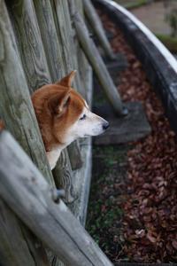 これから日は長くなってゆくよ。 - Yoshi-A の写真の楽しみ