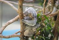ニーナちゃんの好きな寝床 - 動物園に嵌り中2