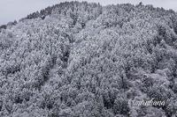 雲海から春色チューリップ。 - MIRU'S PHOTO