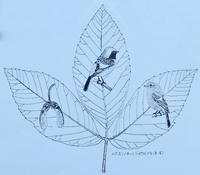 #木の葉絵#leafart 』 眼薬の木・尉鶲 - スケッチ感察ノート (Nature journal)