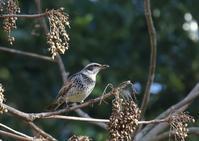 S園にて - 写真で綴る野鳥ごよみ