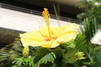 2019秋ハワイひとり旅③ - 卯月-風の吹くまま気の向くまま