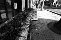 冬の光#04 - Yoshi-A の写真の楽しみ