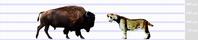 スミロドン(S. populator)vsバイソン - アニマル情報202X