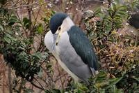 蓮華寺池公園の鳥 - 暮らしの中で