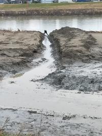 20191224 【河川敷】土砂除去始まる - 杉本敏宏のつれづれなるままに