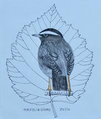 『#木の葉絵#leafart 』 裏白の木・眉白 - スケッチ感察ノート (Nature journal)