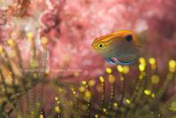 ブルーライン - Diving Life ~Aita pe'a pe'a~