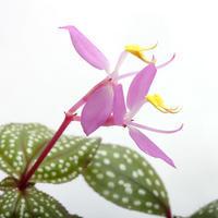 年末年始休業のお知らせ - ZERO PLANTS / BLOG