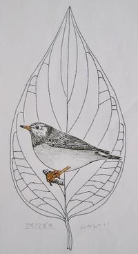 『#木の葉絵#leafart 』 熊野水木・椋鳥 - スケッチ感察ノート (Nature journal)