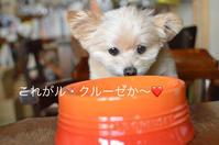 犬用ル・クルーゼのご飯入れ - カンパーニュママの一眼レフ生活とポメプーころすけと日々の出来事日記