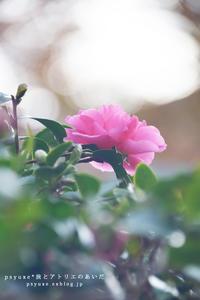 Flower Photograph #16 - psyuxe*旅とアトリエのあいだ