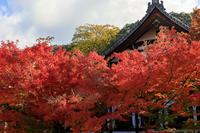 永観堂の紅葉そしてよいお年を… - ぴんぼけふぉとぶろぐ2