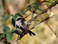 『今年最後の木曽川水園(鳥と植物と風景)』 - 自然風の自然風だより