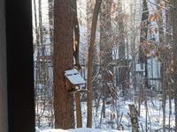 マイナス17℃、霧氷の木々をエゾリス君が駆け回ります。 - 十勝・中札内村「森の中の日記」~café&宿カンタベリー~
