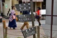 哲学の道…紅葉の反省会② - Taro's Photo