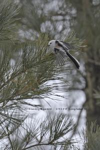 北海道の雪鳥に会いました - healing-bird