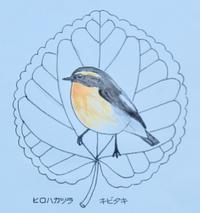 『#木の葉絵#leafart 』  広葉桂・黄鶲 - スケッチ感察ノート (Nature journal)