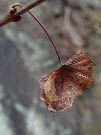 越冬中の卵、幼虫、蛹 - 蝶超天国