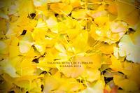 * 黄色い落ち葉 - Kaara's Eye